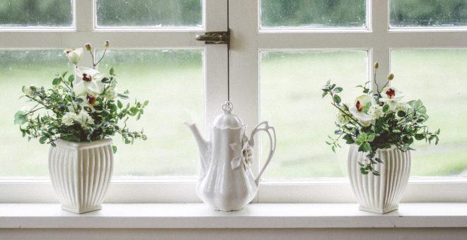 vita-fönster-och-växter